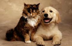 ΝΕΑ ΕΙΔΗΣΕΙΣ (Η αντίδραση μιας γάτας όταν γύρισε μετά από 10 ημέρες στο σπίτι ο σκύλος! (ΒΙΝΤΕΟ))