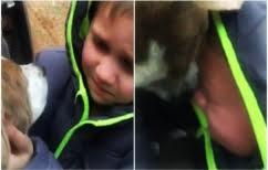 """ΝΕΑ ΕΙΔΗΣΕΙΣ (Ένα ΒΙΝΤΕΟ που θα σας """"λυγίσει"""" – Η αντίδραση ενός παιδιού όταν βλέπει ξανά τον σκύλο του)"""