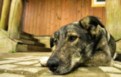 ΝΕΑ ΕΙΔΗΣΕΙΣ (Δείτε που μπορείτε να απευθυνθείτε εάν αντιληφθείτε κακοποίηση ζώου)