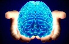 ΝΕΑ ΕΙΔΗΣΕΙΣ (Βρέθηκε ο μηχανισμός που ξυπνά τον εγκέφαλο από τον ύπνο)
