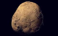 ΝΕΑ ΕΙΔΗΣΕΙΣ (Φωτογραφία μίας πατάτας αγοράστηκε έναντι 1 εκατ. ευρώ!)