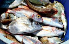 ΝΕΑ ΕΙΔΗΣΕΙΣ (Κατασχέθηκαν και θα δοθούν σε ιδρύματα ψάρια στην Ιχθυόσκαλα Νέας Μηχανιώνας)