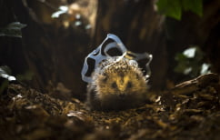 Images by nature photographer and TV presenter Chris Packham for Lidl and Keep Britain Tidy
