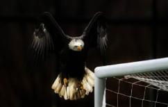 ΝΕΑ ΕΙΔΗΣΕΙΣ (Στον ΠΑΟΚ αγόρασαν… αετό για να πετά πάνω από την Τούμπα)