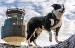 ΝΕΑ ΕΙΔΗΣΕΙΣ (Ένας σκύλος φοράει μάσκα και κυνηγάει πουλιά! (ΒΙΝΤΕΟ))