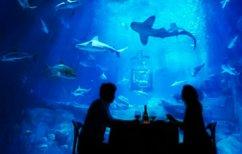 ΝΕΑ ΕΙΔΗΣΕΙΣ (Εσείς θα κοιμόσασταν παρέα με 35 καρχαρίες; (ΒΙΝΤΕΟ))