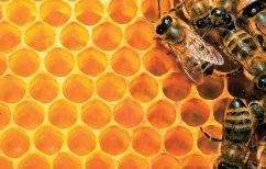 ΝΕΑ ΕΙΔΗΣΕΙΣ (Μέλισσες φτιάχνουν μέλι από δέντρα κάνναβης (ΒΙΝΤΕΟ))