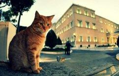 ΝΕΑ ΕΙΔΗΣΕΙΣ (Με τα γαυγίσματα στη Βουλή διασκέδασαν για άλλη μια φορά οι γάτες!)
