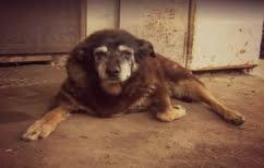 """ΝΕΑ ΕΙΔΗΣΕΙΣ (""""Έφυγε"""" το γηραιότερο σκυλί στον κόσμο – Ξεπερνούσε τα 200 """"ανθρώπινα"""" έτη! (ΒΙΝΤΕΟ))"""