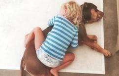 ΝΕΑ ΕΙΔΗΣΕΙΣ (Τα σκυλιά ασφυκτιούν στις αγκαλιές των ανθρώπων, λένε οι ερευνητές)