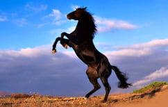 ΝΕΑ ΕΙΔΗΣΕΙΣ (Ο Αλέξης στο άλογο και το μυστικό τους!)
