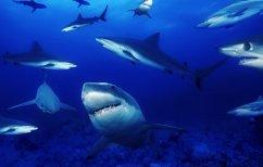 ΝΕΑ ΕΙΔΗΣΕΙΣ (Drone κατέγραψε σε βίντεο 70 καρχαρίες να κατασπαράζουν φάλαινα! (ΒΙΝΤΕΟ))