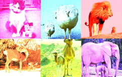 """ΝΕΑ ΕΙΔΗΣΕΙΣ (""""Το μήλο κάτω από τη μηλιά"""", 8 υπέροχες φωτογραφίες με ζώα (ΦΩΤΟ))"""