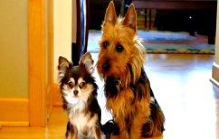 ΝΕΑ ΕΙΔΗΣΕΙΣ (Δύο σκυλάκια νιώθουν ενοχές και μας χαρίζουν το ΒΙΝΤΕΟ του μήνα)