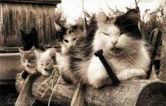ΝΕΑ ΕΙΔΗΣΕΙΣ (Η ιταλική μαφία έκαψε δάση χρησιμοποιώντας… γάτες!)
