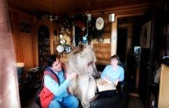 ΝΕΑ ΕΙΔΗΣΕΙΣ (Οικογένεια Ρώσων υιοθέτησε μια… αρκούδα! (ΦΩΤΟ))