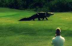 ΝΕΑ ΕΙΔΗΣΕΙΣ (Αλιγάτορας-τέρας που θυμίζει… δεινόσαυρο έκοβε βόλτες σε πάρκο της Φλόριντα (ΒΙΝΤΕΟ))