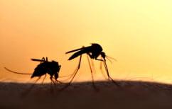 ΝΕΑ ΕΙΔΗΣΕΙΣ (Διαβάστε με ποιόν τρόπο μειώθηκαν τα κουνούπια 80% στην Κεντρική Μακεδονία μέσα σε μια βδομάδα)