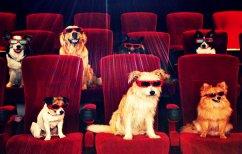 ΝΕΑ ΕΙΔΗΣΕΙΣ (Σινεμά για… σκύλους στο Τελ Αβίβ! (ΒΙΝΤΕΟ))