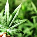 ΝΕΑ ΕΙΔΗΣΕΙΣ (Σε διαβούλευση το σχέδιο νόμου για την εξαγωγή και κυκλοφορία προϊόντων φαρμακευτικής κάνναβης)