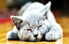 ΝΕΑ ΕΙΔΗΣΕΙΣ (Συγκέντρωση στοιχείων για ιό που εξοντώνει γάτες σε Θεσσαλονίκη και Χαλκιδική)