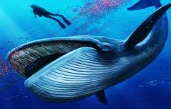 ΝΕΑ ΕΙΔΗΣΕΙΣ (Η φωτογραφία που έγινε viral – Κανείς δεν είδε τη φάλαινα)