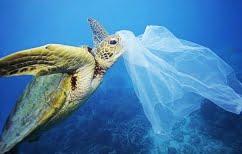 ΝΕΑ ΕΙΔΗΣΕΙΣ (Ενώπιον της δικαιοσύνης ο ψαράς που κακοποίησε χελώνα (ΒΙΝΤΕΟ))