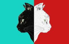 ΝΕΑ ΕΙΔΗΣΕΙΣ (Άσπρη γάτα, μαύρη γάτα)