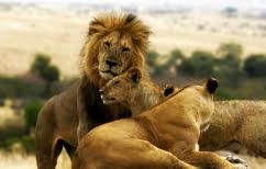 ΝΕΑ ΕΙΔΗΣΕΙΣ (Συγκινητικό ΒΙΝΤΕΟ: Λιοντάρι κλαίει από την πείνα)