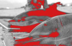 ΝΕΑ ΕΙΔΗΣΕΙΣ (Θλιβερό ρεκόρ νεκρών δελφινιών στις παραλίες της Βουλγαρίας)