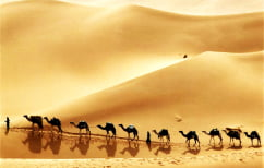 ΝΕΑ ΕΙΔΗΣΕΙΣ (Η… καμήλα ευθύνεται για το πρώτο κρυολόγημα του ανθρώπου)