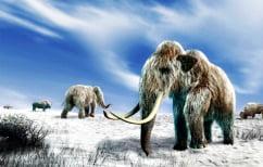 ΝΕΑ ΕΙΔΗΣΕΙΣ (Πότε πέθαναν τα τελευταία μαμούθ)