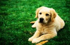 ΝΕΑ ΕΙΔΗΣΕΙΣ (Αυτή είναι η πιο φιλική πόλη του κόσμου για σκύλους)