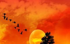ΝΕΑ ΕΙΔΗΣΕΙΣ (Ταξιδιάρικα πουλιά πετούν ενώ κοιμούνται)