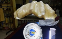 ΝΕΑ ΕΙΔΗΣΕΙΣ (Φτωχός ψαράς κρατούσε γιγάντιο μαργαριτάρι άξιας 100 εκ. δολαρίων στο σπίτι του για… γούρι! (ΒΙΝΤΕΟ))