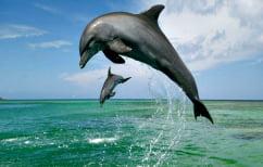ΝΕΑ ΕΙΔΗΣΕΙΣ (Τα δελφίνια τραγουδάνε στα μωρά τους πριν γεννηθούν!)