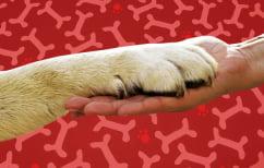 ΝΕΑ ΕΙΔΗΣΕΙΣ (Τελικά, οι σκύλοι καταλαβαίνουν απόλυτα τι λένε οι άνθρωποι;)