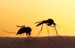 ΝΕΑ ΕΙΔΗΣΕΙΣ (Aντιπαραθέσεις Ιατρικού Συλλόγου και Υπουργείου για τα κρούσματα ελονοσίας)