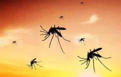 ΝΕΑ ΕΙΔΗΣΕΙΣ (Έγκαιρη και ψύχραιμη προληπτική αποτίμηση του κινδύνου εξάπλωσης της ελονοσίας)