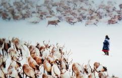 ΝΕΑ ΕΙΔΗΣΕΙΣ (Περισσότεροι από 300 τάρανδοι νεκροί από κεραυνό)