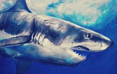 ΝΕΑ ΕΙΔΗΣΕΙΣ (Πως κοιμούνται οι λευκοί καρχαρίες (ΒΙΝΤΕΟ))