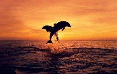 ΝΕΑ ΕΙΔΗΣΕΙΣ (Για πρώτη φορά καταγράφηκε και αναλύθηκε ο διάλογος ανάμεσα σε δελφίνια)