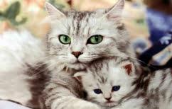 ΝΕΑ ΕΙΔΗΣΕΙΣ (Πώς οι γάτες κατέκτησαν τον κόσμο)
