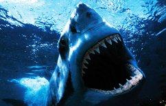 ΝΕΑ ΕΙΔΗΣΕΙΣ (Η δραματική μάχη ενός δύτη με έναν λευκό καρχαρία (ΒΙΝΤΕΟ))