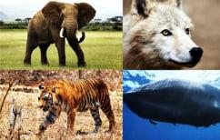 ΝΕΑ ΕΙΔΗΣΕΙΣ (Aυτά τα είδη ζώων απειλούνται με εξαφάνιση)