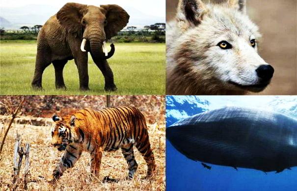 Endangered-Animals