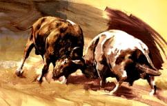 ΝΕΑ ΕΙΔΗΣΕΙΣ (Σκληρό βίντεο: Νεκροί δυο ταύροι σε μετωπική στην αρένα)