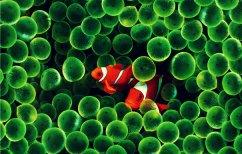 ΝΕΑ ΕΙΔΗΣΕΙΣ (Τα ψάρια τραγουδούν μαζί το ξημέρωμα και το σούρουπο, όπως τα πουλιά)