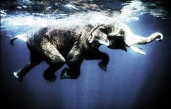 ΝΕΑ ΕΙΔΗΣΕΙΣ (Ελέφαντας μπαίνει μέσα σε ποτάμι για να σώσει άνδρα που πνίγεται! (ΒΙΝΤΕΟ))