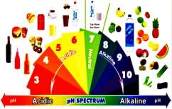 ΝΕΑ ΕΙΔΗΣΕΙΣ (Ποιες είναι οι αλκαλικές και ποιες οι όξινες τροφές)